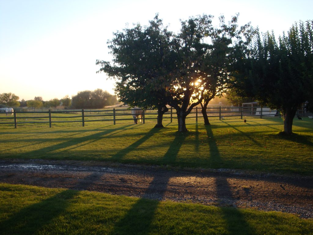 Dreamhaven Ranch – Where horses abound, healing is found